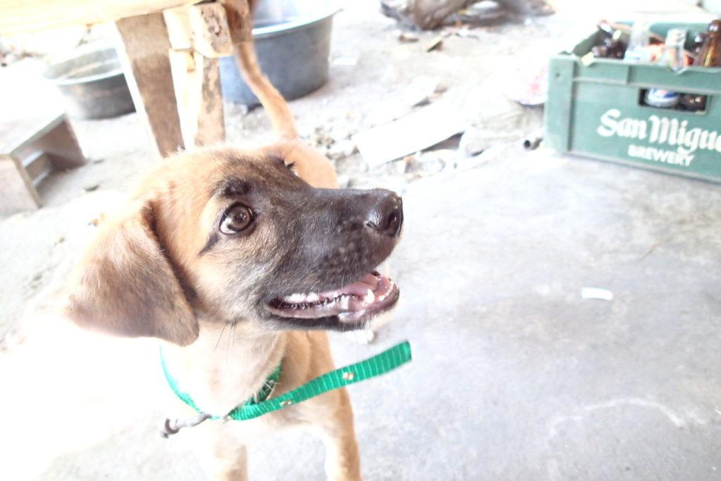 イッサの愛犬ラカル