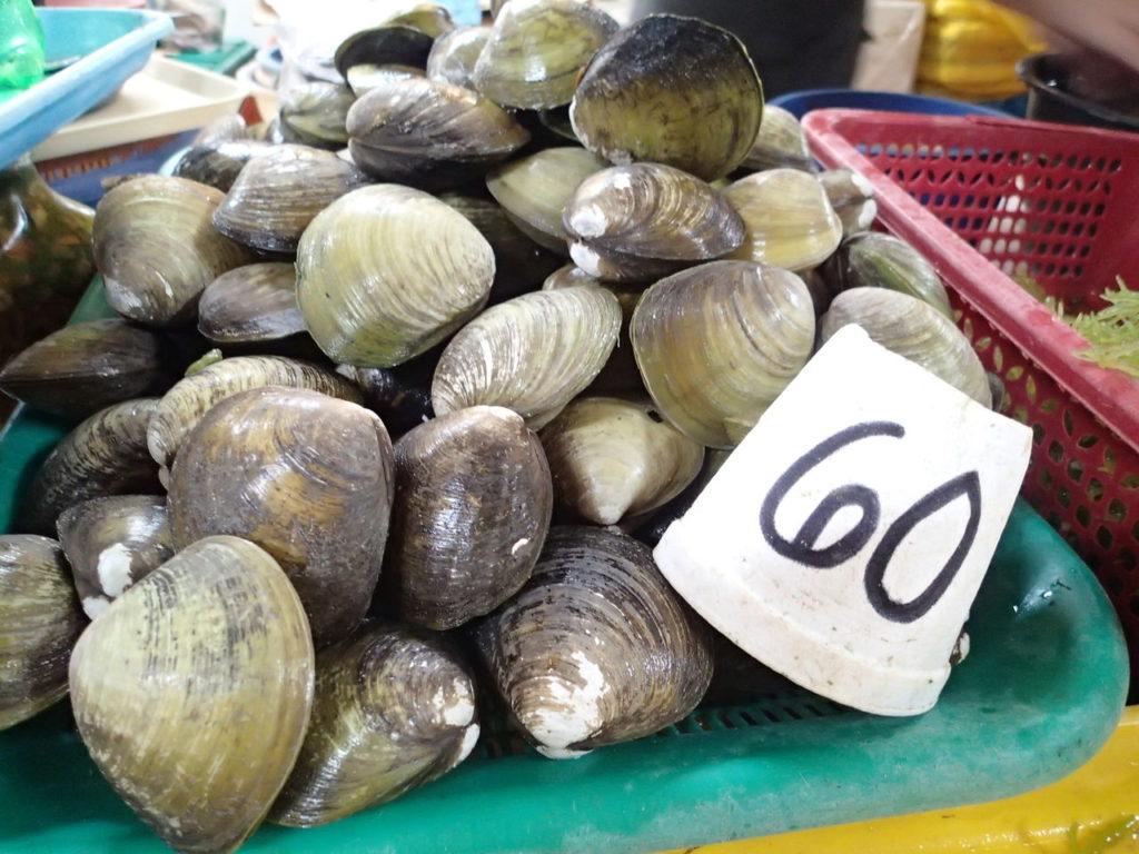 ドゥマゲッティのハマグリのような味の貝