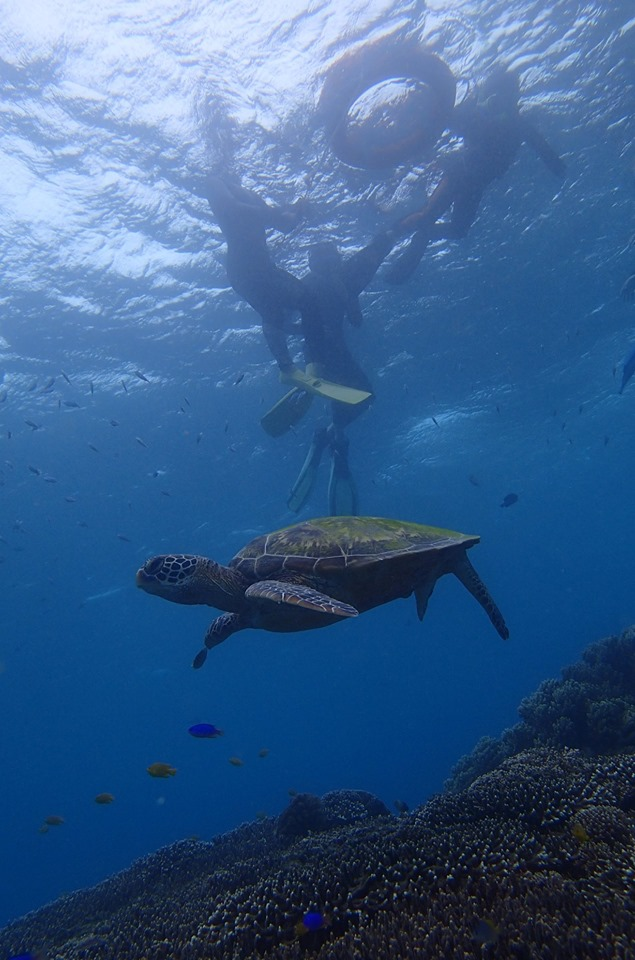 ドゥマゲッティ留学中の休日の楽しみ(アポ島で海亀と泳ぐ)